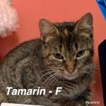 Image of Tamarin