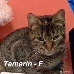 Image of Tamarin