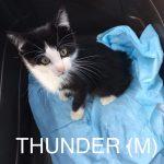 Image of Thunder