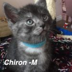 Image of Chiron