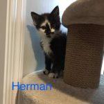 Image of Herman