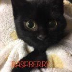 Image of Raspberry