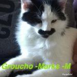 Image of Groucho Marks