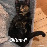 Image of Olitha