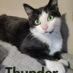 Image of Thunder