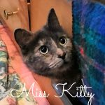 Image of Miss Kitty