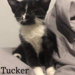 Image of Tucker