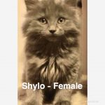 Image of Shylo