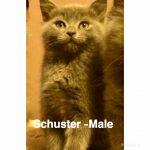 Image of Shuster
