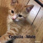 Image of Tequila