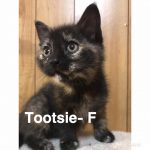 Image of Tootsie