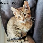 Image of Odysseus