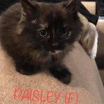 Image of Paisley