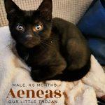 Image of Aeneas