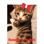 Image of Babette