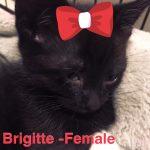 Image of Brigitte