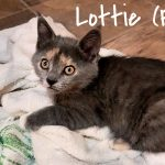Image of Lottie