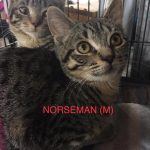 Image of Reserved- Norseman