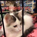 Image of Hershey