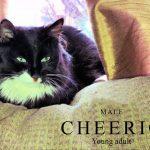 Image of Cheerio
