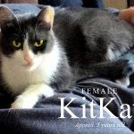 Image of KitKat