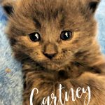Image of Cartney - Reserved