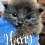Image of Harry - Reserved