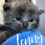 Image of Lenny - Reserved