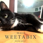 Image of Weetabix