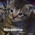 Image of Macadamia - Reserved
