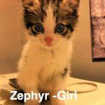 Image of Zephyr