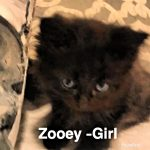 Image of Zooey