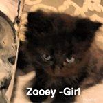 Image of Zooey