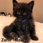 Image of Zahir