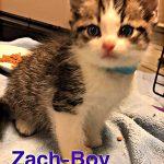 Image of Zach