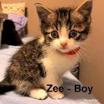 Image of Zee