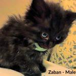 Image of Zaban