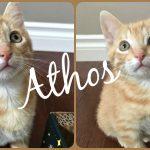 Image of Athos