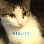 Image of Riko