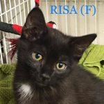 Image of Risa