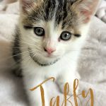 Image of Taffy