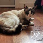Image of Dora