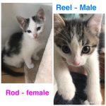 Image of Reel