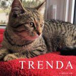 Image of Trenda