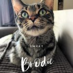 Image of Brodie
