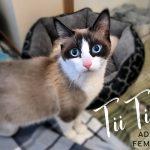 Image of Tii Tii