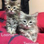 Image of Loonie