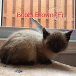 Image of Bobbi Brown