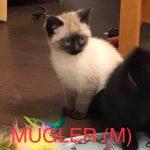 Image of Mugler