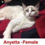 Image of Anyetta